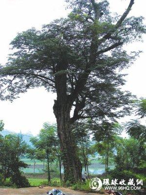 紫檀木图片
