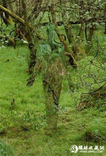 呼吁环保(组图) 4米高白菜雕塑落户学校操场 寓意廉政教育