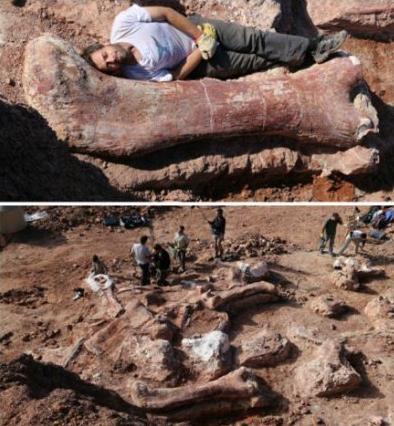 阿根廷发现最大恐龙骨骼化石